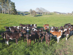 Minimising weaning stress on farms