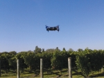 UAV flying over a vineyard block in Hawkes Bay.