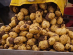 Potato virus triggers investigation