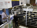 Livestock sales are still going ahead under COVID-19 restrictions.