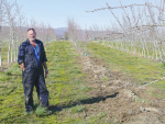 Leaning Rock Orchard manager Peter Bennie shows where a small number of trees had to be destroyed because of the import accreditation issue.