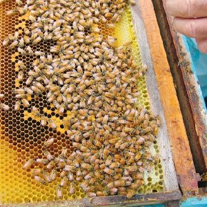 Beekeepers have biosecurity concerns