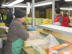 Hort sector adapts to new normal