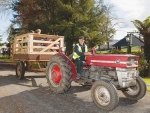 A volunteer driving visitors around with a vintage Massey Ferguson tractor.