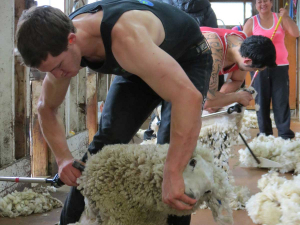 The wool industry is hoping for some lifting of COVID-19 restrictions.
