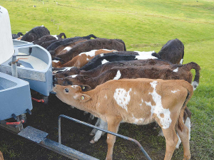 Casein-based milk replacers and whey-based milk replacers both have their place, offering different benefits to animals.