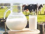 Milk payout this season will be under stress, says MPI.