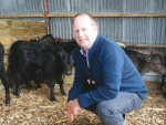Firstlight Wagyu supply manager Peter Keeling with Wagyu cross calves.