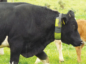 Moocall heat monitors cows for heat detection.