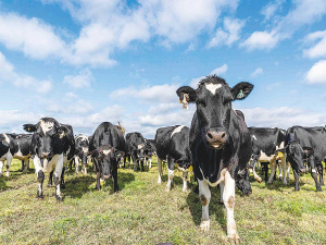 Trends show more farmers demanding sexed semen and genetic solutions to help minimise the environmental footprint of their herd.