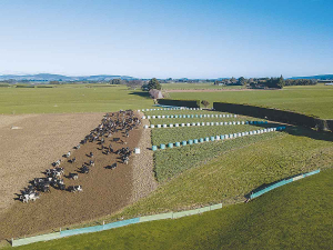 DairyNZ says farmers should plan now for a successful winter in 2020.