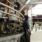 Dairy Awards entry deadline looms