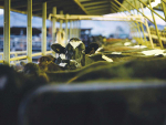 The milking environment is ideal for bacterial growth.