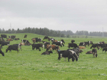 Warnings on dairy sector debt