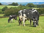 Fonterra has forecast an opening market-linked organic milk price of $9.20/kgMS for the 2016/17 season.