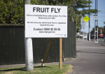 Fruit fly controls lifted