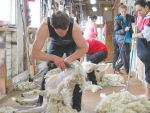 Shearing and wool courses
