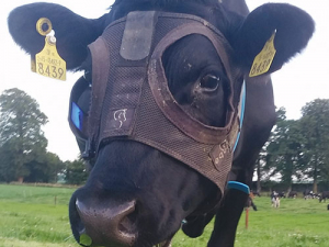 Bovine Light Mask.