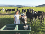 Ben Walling and Sarah Flintoft's daughter Grace with animals yet to be culled on their M. bovis-infected farm at Lumsden.