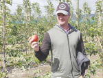 Will apple trees replace pines in North Canterbury?