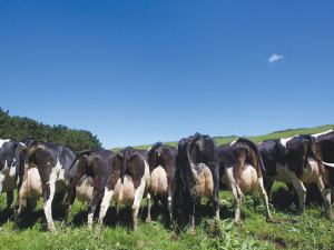 A visiting expert says udder quality is the number one issue in NZ.