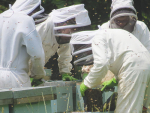 Apiculture NZ expects some rationalisation as the honey market downturn bites.