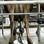 Fonterra eyes milk growth
