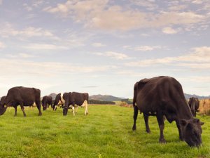 Climate Change workshops target dairy farmers