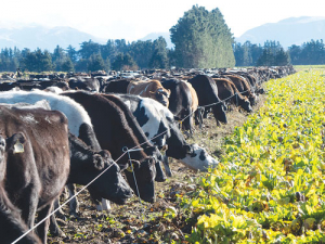 The project has found that farmers are increasingly using hill country forage crops and pastures to finish stock and that the increased erosion risk is being partly mitigated by farming practices.