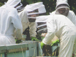 NZ apiculture industry sees continued growth