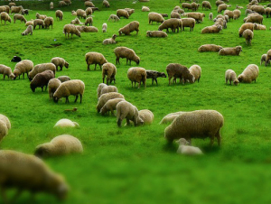 The 7250 bales of North Island wool on offer saw a 72% clearance with most types easing further.
