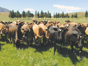 BVD is costing the cattle industry $150m annually in production losses.