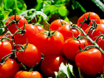 Tomatoes NZ is the latest industry group to sign up to a biosecurity partnership with government.