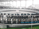 China's largest rotary parlour